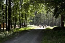 Fahrradfahrer in der Dippoldiswalder Heide